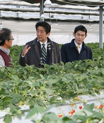 Photograph of the Prime Minister visiting a strawberry farm (1)