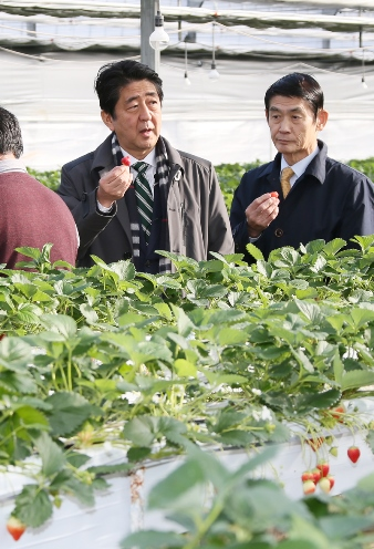 Photograph of the Prime Minister visiting a strawberry farm (2)